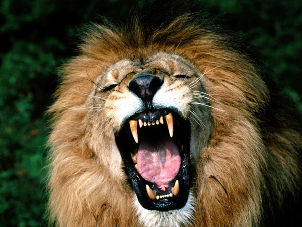 lionroar1 11 EDM Tracks With Great Animal Samples