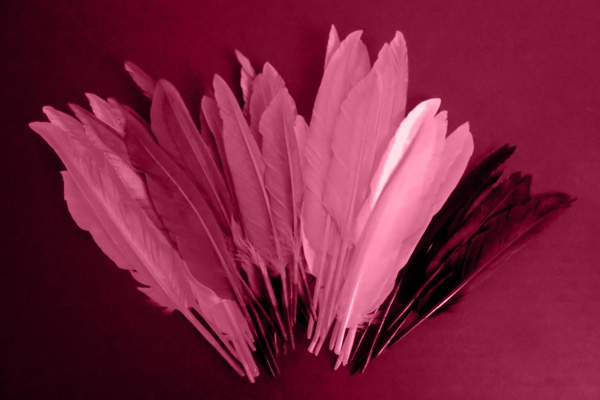 feathers