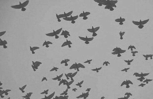 birdsflockingggg