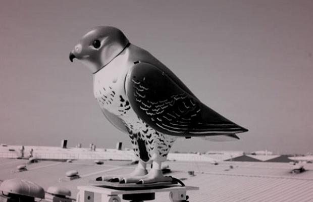 EDM-falcon