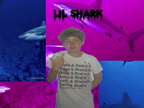 shark34345